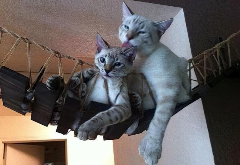 Будинок для кішки своїми руками 1