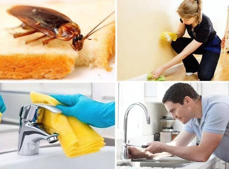Як знищити тарганів у квартирі 16