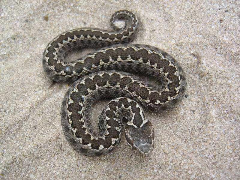 Завелися змії: як боротися з шкідниками 1