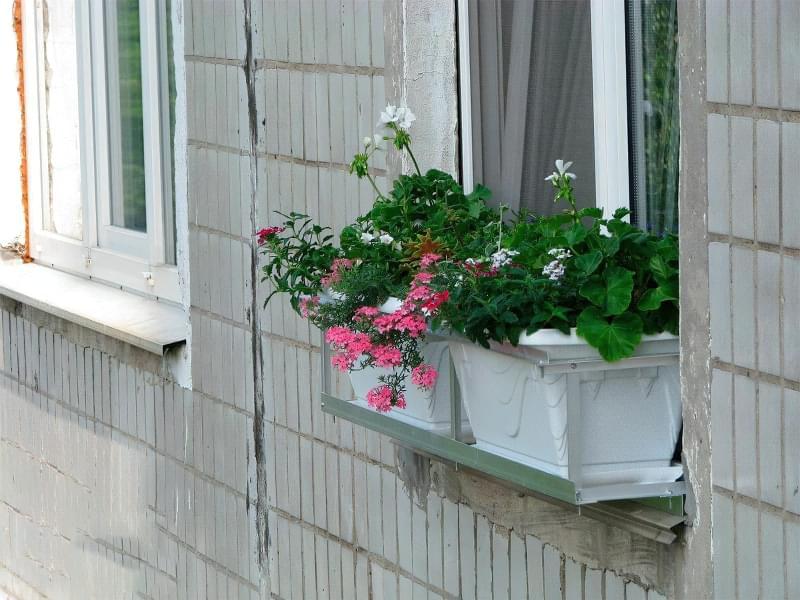 Квіти за вікном: кріплення, вибір, догляд 4