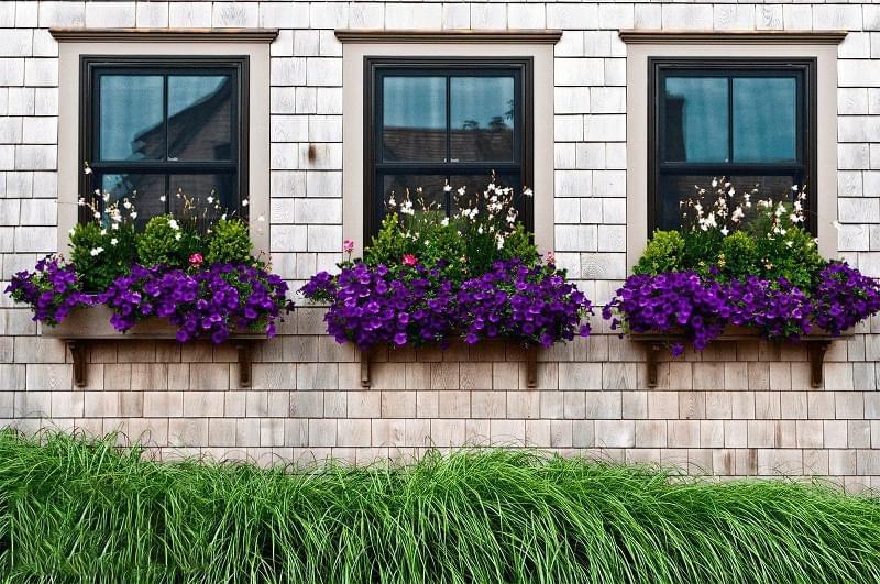 Квіти за вікном: кріплення, вибір, догляд 1