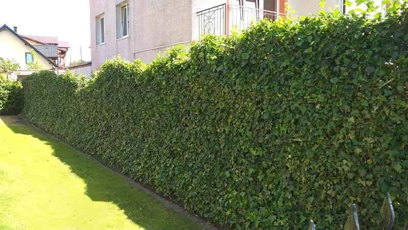 Сучасні варіанти парканів: єврожалюзі, металевий паркан, алюмінієві панелі 12
