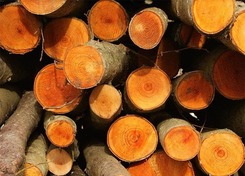 Вибираємо дрова для каміна 5