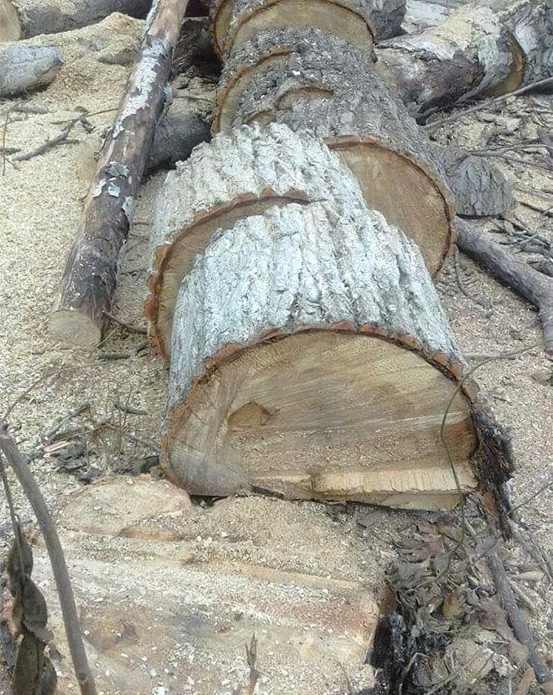 Більше тепла - менше диму, які дрова вибрати 5